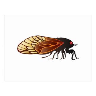 Cicada - Magicicada - Emergence of Amazing Insect Postcard