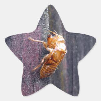 Cicada Nymph Star Sticker