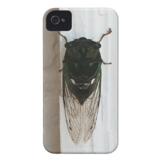 Cicada Photo iPhone 4 Cover