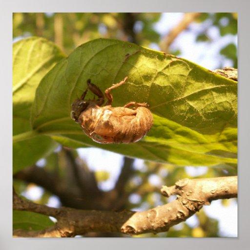 Cicada Shell On A Leaf Poster