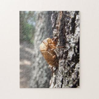 Cicada Shell Puzzle