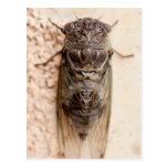 cicada tarjeta postal