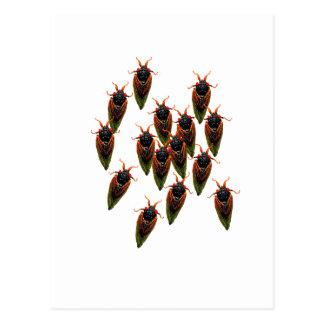 cicadas postcard