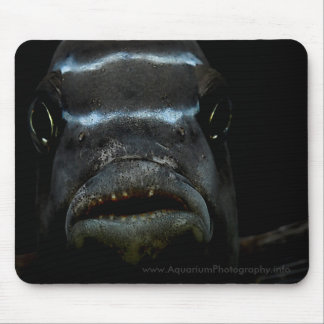 Cichlid africano Mousepad