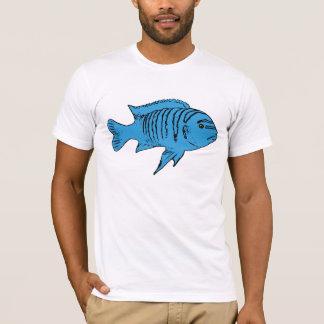 Cichlid azul de los pescados playera