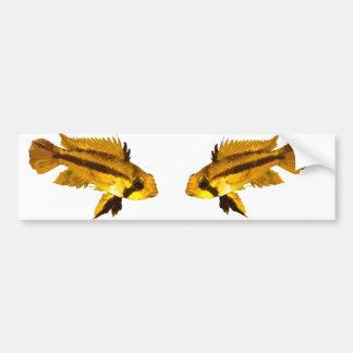 Cichlid enano etiqueta de parachoque