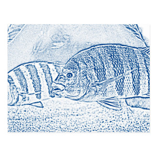 cichlid fish blue and white animal postcard