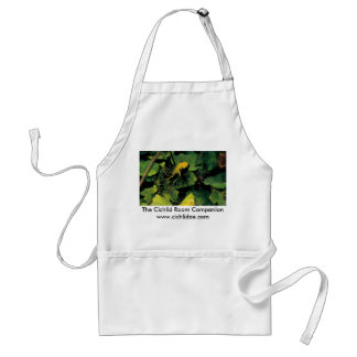 Cichlid Room Companion - Herichthys labridens Adult Apron