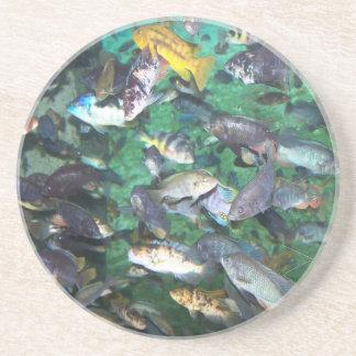 Cichlids, cichlids, and more cichlids! Fish fish! Drink Coasters