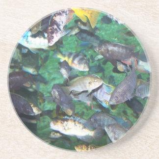Cichlids, cichlids, and more cichlids! Fish fish! Coaster