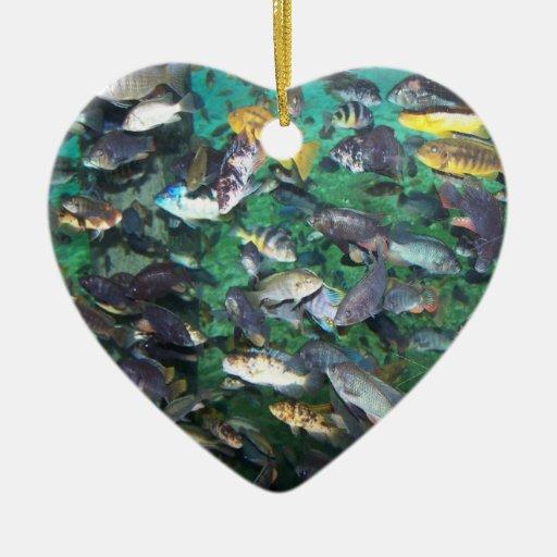 ¡Cichlids, cichlids, y más cichlids! ¡Pescados de Ornamentos De Reyes
