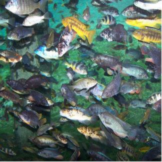 ¡Cichlids, cichlids, y más cichlids! ¡Pescados de  Esculturas Fotograficas