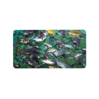 ¡Cichlids, cichlids, y más cichlids! ¡Pescados de  Etiquetas De Dirección