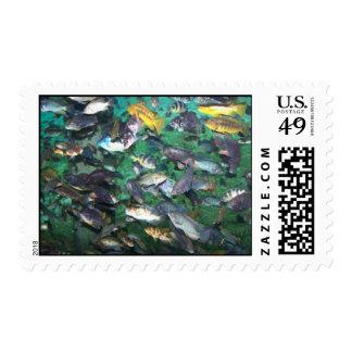 ¡Cichlids, cichlids, y más cichlids! ¡Pescados de Envio