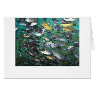 ¡Cichlids, cichlids, y más cichlids! ¡Pescados de Tarjeta De Felicitación