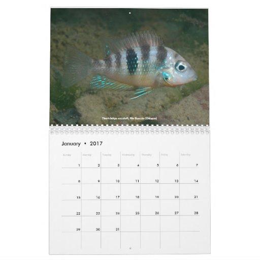 Cichlids of Mexico Calendar