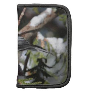 Cickadee Negro-capsulado