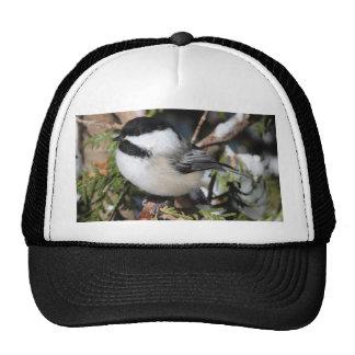 Cickadee Negro-capsulado Gorros Bordados
