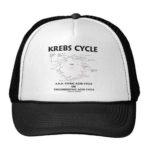 Ciclo de ácido cítrico del ciclo de Krebs A.K.A. t Gorro