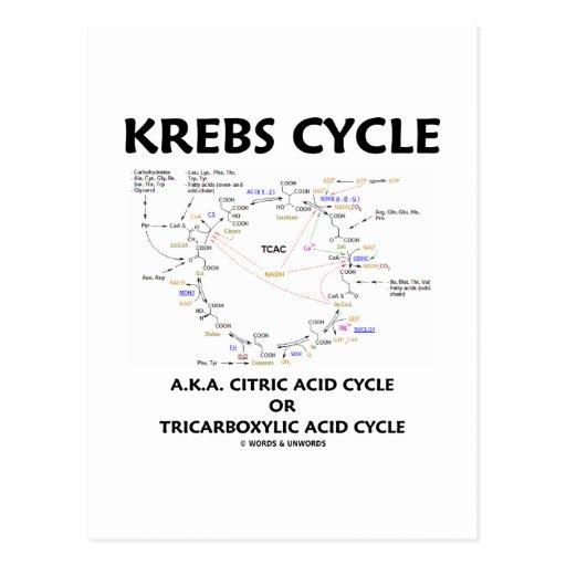 Ciclo de ácido cítrico del ciclo de Krebs A.K.A. t Tarjeta Postal