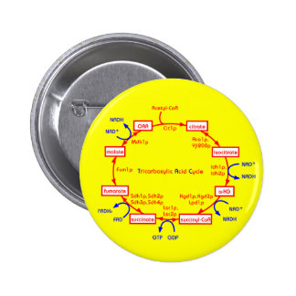 ciclo de ácido tricarboxílico pins