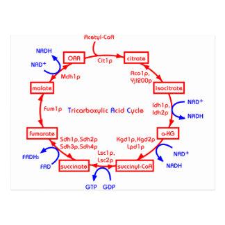 ciclo de ácido tricarboxílico tarjetas postales