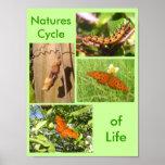 Ciclo de las naturalezas de la vida posters