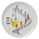 Ciclo vital de la DNA Platos