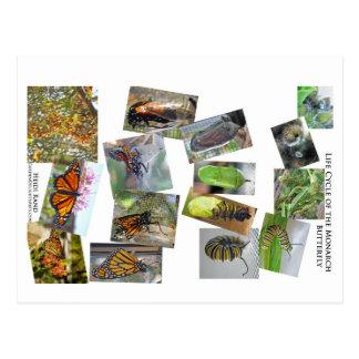 Ciclo vital de la mariposa de monarca postales