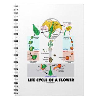Ciclo vital de una flor (angioesperma) libros de apuntes