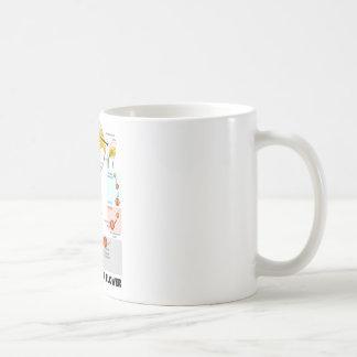 Ciclo vital de una flor (angioesperma) taza de café