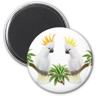 Cidra y imán del Cockatoo del azufre