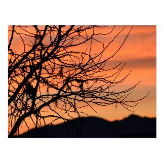 Cielo anaranjado del invierno tarjeta postal