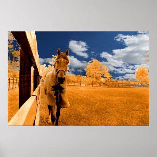 cielo azul anaranjado de la cerca del caballo que  posters