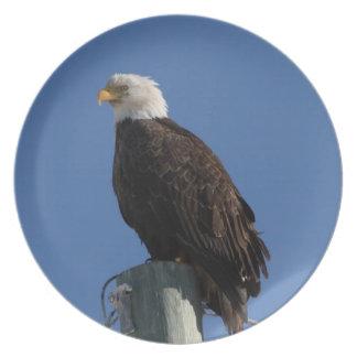 Cielo azul calvo de BEBS Eagle Platos Para Fiestas