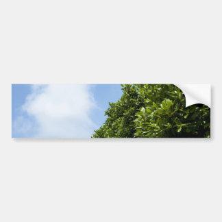 Cielo azul con la nube blanca y el follaje verde pegatina de parachoque