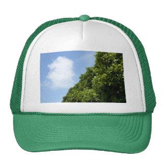 Cielo azul con la nube blanca y el follaje verde gorras