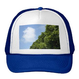 Cielo azul con la nube blanca y el follaje verde gorra