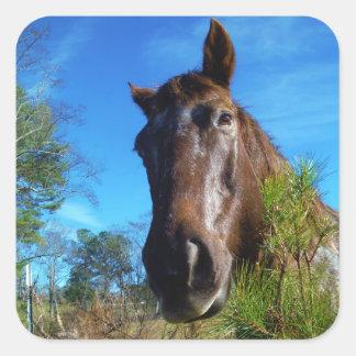 Cielo azul de Brown y del caballo color nata Pegatina Cuadrada