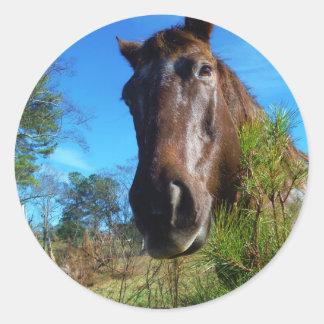 Cielo azul de Brown y del caballo color nata Pegatina Redonda