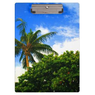 cielo azul de la Florida de las uvas del mar de la
