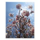 cielo azul de la magnolia rosada 11x14 con las nub fotografías