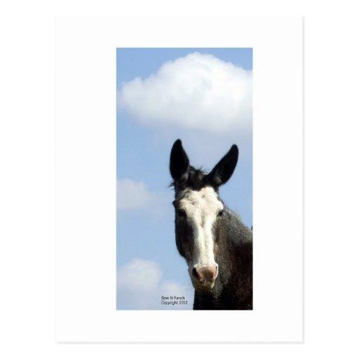 Cielo azul de la mula calva de la cara postal