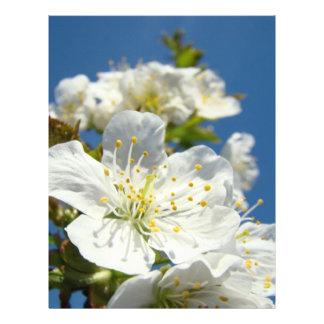 Cielo azul de las flores de cerezo del papel del t plantilla de membrete