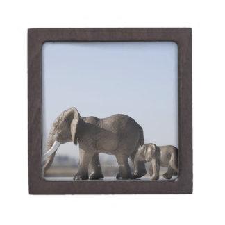 Cielo azul del origen familiar del elefante caja de regalo de calidad