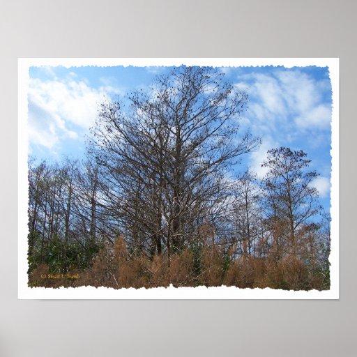 Cielo azul del pantano de la escena del invierno d posters