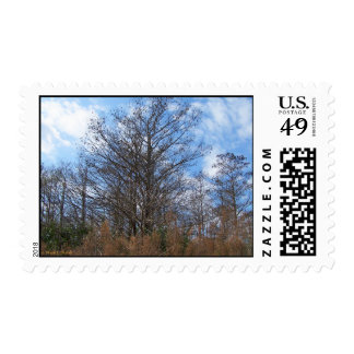 Cielo azul del pantano de la escena del invierno sello