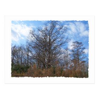 Cielo azul del pantano de la escena del invierno postal