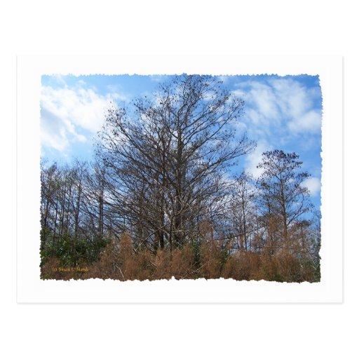 Cielo azul del pantano de la escena del invierno tarjeta postal