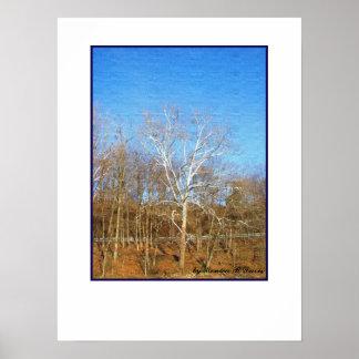 Cielo azul fotografía blanca de la bella arte de impresiones
